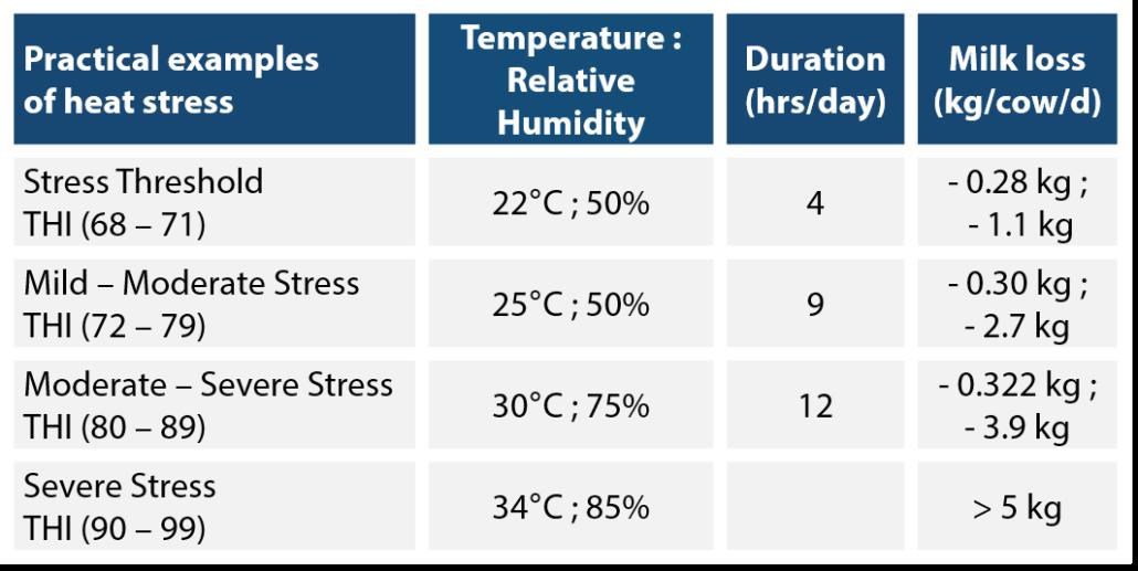 Heat stress impact milk yield dairy cow