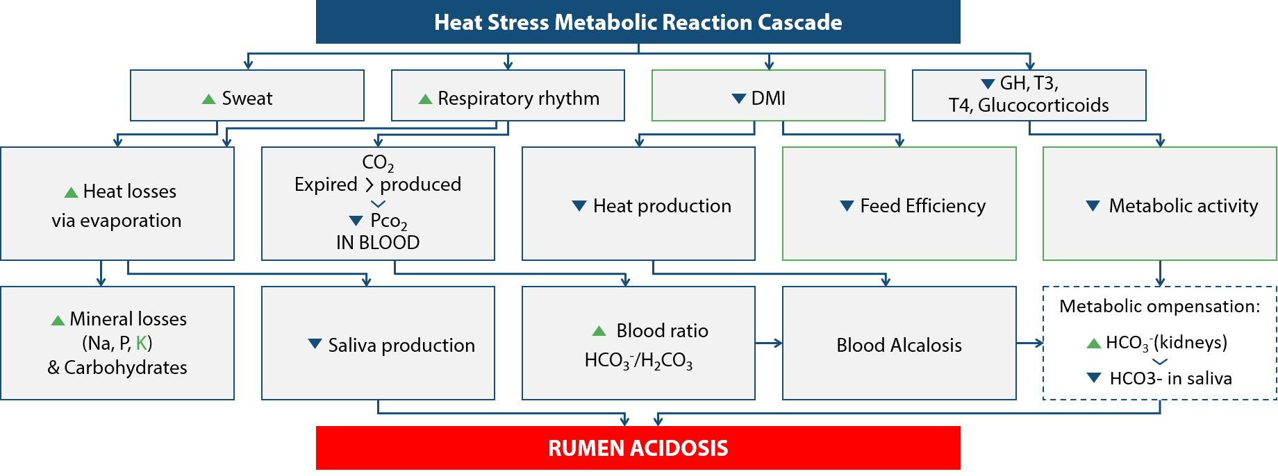 Dairy cow heat stress metabolic reaction cascade