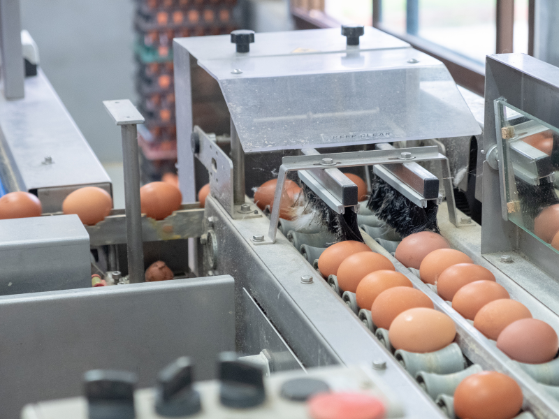 Egg production eggshell quality